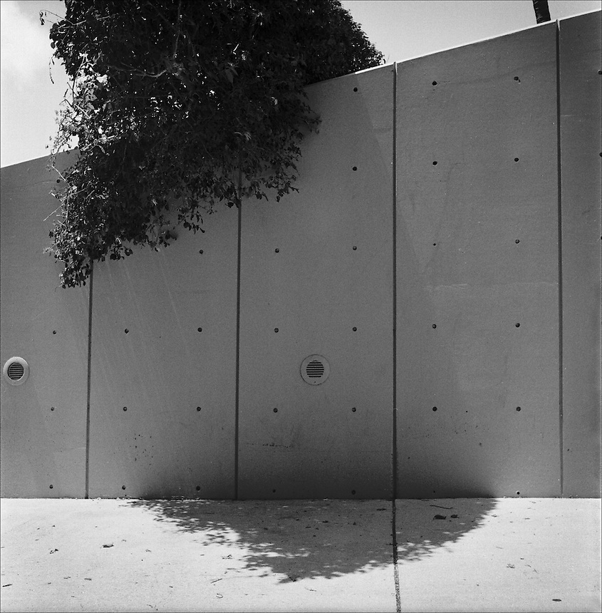 Bougainvillaea<br /> From &quot;The other wind&quot; series. Miami, Florida, 2010