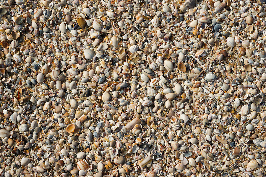 Shells on the beach, put there during the high tide