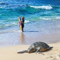 A Hawaiian green sea turtle and child holding a boogie board at Ho'okipa Beach, Maui.