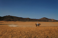 A rider works with a headstrong mount as he trains his mustang kicking up a small cloud of dust in the dry Nevada desert. <br /> <br /> An homage to Bill Allard.<br /> <br /> Tom King trains his horse for the Extreme Mustang Makeover competition.  He is gentle but firm with Jimmy who has a lot of energy.  The three year old was born in Palomino Valley.