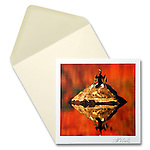 Darter<br />