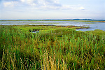 A salt marsh in Wellfleet Massachusetts