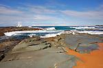Wamberal Beach, NSW