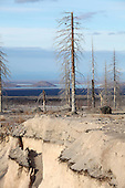 Dead trees and erosion of the pyroclastic flow deposits in area devastated by the 1964 sector collapse and associated Plinian eruption of Shiveluch Volcano, Kamchatka, Russia.