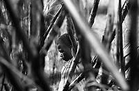 Child labor at sugarcane cutting in the rural area of Vitoria da Conquista in Bahia State, northeastern Brazil.