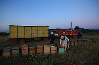 Onéa Dinu Calin and Lorin prepare the hives for this evening's journey. The linden honey period is reaching its end and tonight a 180 km journey awaits them, at a speed of 40km/hour. Tomorrow morning, they will find themselves alone in an immense field of sunflowers further south, a kilometer from the sea.