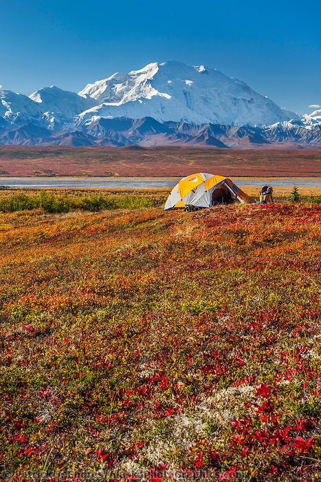 Hiker stands by the tent camp and takes a photo of Denali during the autumn in Denali National Park, Alaska.