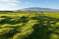 The green rolling hills of Kamuela backed by Mauna Kea, North Kohala, Big Island of Hawai'i.