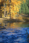 Golden fall color reflected in the water of the Blackfoot River in Montana
