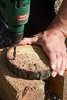 Mädchen, Kind baut ein Osternest aus Baumscheibe, Weidenästchen, Moos, Gänseblümchen und bunten Ostereiern; 1. Schritt: In den Rand einer Baumscheibe werden Löcher gebohrt