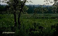 MD07-001p  Fireflies at Night - Digitally Inhanced