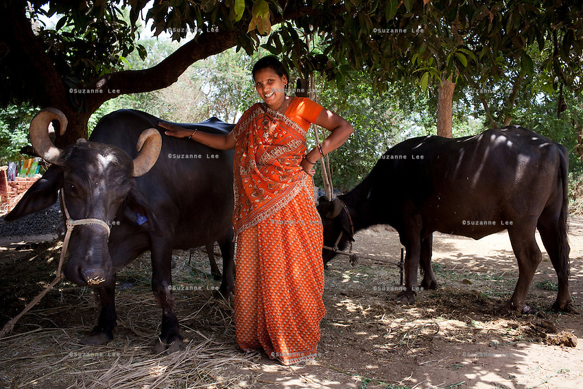 """Shardaben poses with her buffaloes that she bought with the money she earned from surrogacy...Shardaben Kantiben, 31; Husband is Kantibhai Motibhai (37).3 children --- 2 girls -  Usha(15) and Lakshmi (18, in pink); 1 boy, Chintan (17).- Education costs for all three come to Rs. 15,000 per year.- Shardaben was a two-time surrogate. First time she gave birth to twin girls for a Taiwanese couple and the second time a boy for an Indian couple from America (photo on TV set because she's proud that it was a boy).- The second time she became emotional and they got a gold ring of Rs. 1,500 made for the boy, which they presented to the biological parents. They are not in touch with either couple..- From the two surrogacies, they earned a little over 700,000rupees..-200,000rupees will be given as dowry for Lakshmi's wedding..- They leased agricultural land (Rs. 2 lakhs for five years) which earns them Rs. 60,000-70,000 a year; they bought two buffaloes worth Rs. 60,000 and make almost 6000-7000 per month selling milk; they bought a motorbike for Rs. 25,000; they put some money into house repairs and the construction of toilets, and opened a fixed deposit in Shardaben's name for Rs. 1.5 lakh and one in the name of their son, Chintan, for Rs. 25,000..Quotes..""""Everyone says they'll keep in touch and take down addresses and phone numbers but nobody looks back. And I guess it works well. Our main interest was in the money. Their main interest is in the baby."""" - KantiBhai.""""Their rules apply at the surrogate house. It does curtail the freedom. When I used to go, everybody would just be lying. They count the days when they can go back."""" - Kantibhai.""""Ours is natural birth but surrogacy is a man-made pregnancy. There's a lot of risk. She must have taken at least 300 injections."""" - Kantibhai of his wife...The Akanksha Infertility Clinic is known internationally for its surrogacy program and currently has over a hundred surrogate mothers pregnant in their environmentally controlled surro"""