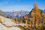 Yellow larches are seen in the foreground along the Lewis and Wing Lake trail in Washington's North Cascade Mountain region with Tower Peak and Golden Horn in the distance.