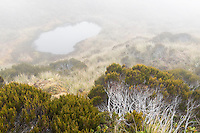Alpine tarn in fog with alpine vegetation, Westland Tai Poutini National Park, West Coast, World Heritage Area, New Zealand