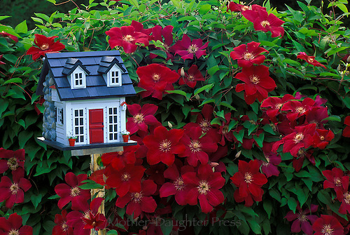 Unique Victorian birdhouse in backyard, red flowers with red clematis flowers growing around it