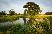 Papercourt water meadows along the River Wey. Nr. Ripley, Surrey, UK.
