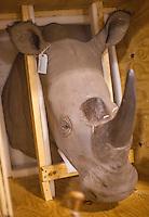 Rhino Horn, China