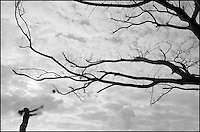 From &quot;Dead Tree Game&quot; series<br /> Sabal Chase Park, Kendall, Miami, FL