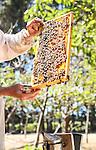 Margaret River Honey Company, January 2017