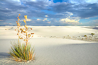 Yucca Sunset - White Sands, New Mexico - White Sands National Monument
