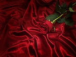 Single red rose on shiny silky fabric background