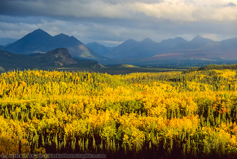 Autumn, Birch, Aspen trees and Alaska mountains, Denali National Park entrance, Alaska