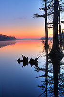 Reflection of cypress trees and stumps at sunrise looking out on the Pasquotank River at Elizabeth city North Carolina.