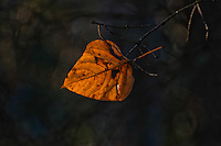 &quot;SIMPLICITY&quot;<br />