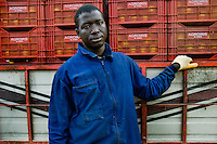 A Subsaharian immigrant from Africa works in the greenhouse of El Ejido, Spain, 22 May 2007. El Ejido, a dry region on the coast of Andalusia, has changed during the last decades into the centre of vegetable production not only for the Spanish market. A half of Europe is supplied by tomatoes, peppers and melons from El Ejido. This economic miracle is from a major part based on a cheap labor force of illegal immigrants from Maghreb and Subsaharian Africa. Tens of thousands of workers keep the plastic sea of greenhouses running for the minimum wage of 30 Euros a day.
