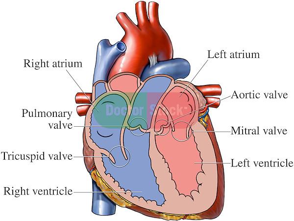 Открытое окно в сердце при беременности