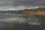 shorebirds on beach near Steele Reef