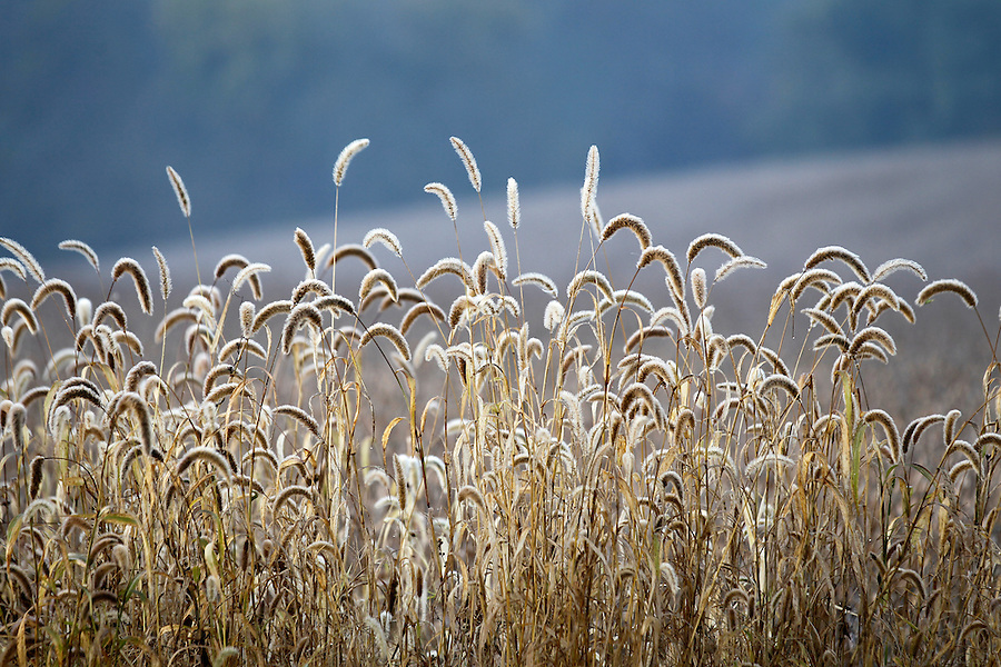 Light from the sunrise illuminates a farm growing wheat in Madison County, VA.  Photo/Andrew Shurtleff