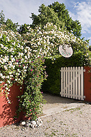 A bower of white climbing roses heralds the entrance to Ca' delle Rose