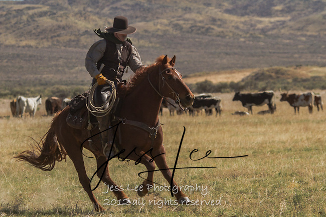 Image result for JESS LEE WESTERN PHOTOS