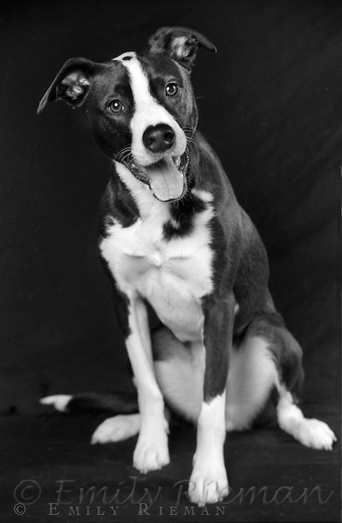 Dogs Black And White Photography Black And White Mix-breed Dog