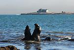 Elephant seal bulls spar at Bight Beach