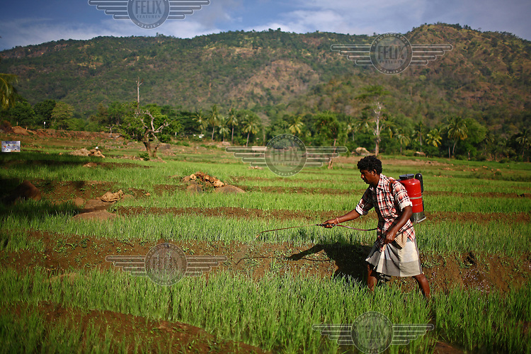 35 year old D.M.A. Karuna Rathna tends his rice field in Lama Suria. He received a loan and business training from the International Fund for Agricultural Development (IFAD).