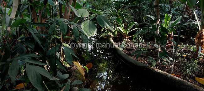 Tropical Rainforest Glasshouse (formerly Le Jardin d'Hiver or Winter Gardens), 1936, René Berger, Jardin des Plantes, Museum National d'Histoire Naturelle, Paris, France. Panoramic view of luxuriant Tropical vegetation on both side of a pool of the Art Deco building, reflecting the glass and metal structure.
