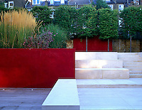 A red Venetian plaster wall terraces the garden into two seperate rooms with a series of white limestone steps leading to back of garden lined with pleached Hornbeams