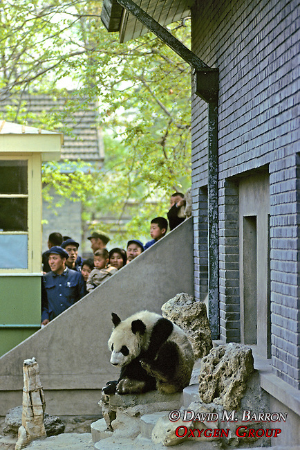 People And A Panda