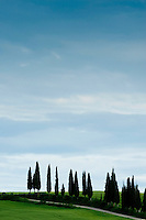 Cypress tress in Val d' Orcia, Unesco World Heritage Listed site in Tuscany, Italy