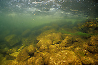 Underwater Scene, Platte River, MI<br /> <br /> ENGBRETSON UNDERWATER PHOTO
