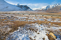Trans Alaska Oil Pipeline traverses the tundra of Alaska's Arctic, north of the Brooks mountain range.