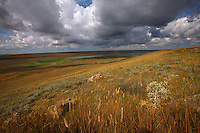 Steppe landscapes. Bagerova Steppe, Kerch Peninsula, Crimea, Ukraine