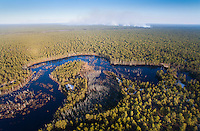 Pitch Pine Forest & the Batsto River, Pitch Pine Forest & the Batsto River, Wharton State Forest