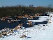 Natuurgebied het Zwanenwater is gelegen in de duinen bij Callantsoog. Het terrein wordt beheerd door Natuurmonumenten.