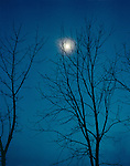 Full moon and trees on a winter night, Lombardy, Italy