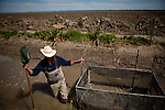 "California Trout's Jacob Katz wades next to a ""live car"" used to catch and count fish in a rice field on Knaggs Ranch near Woodland, California, March 23, 2013. Research by UC Davis Center for Watershed Sciences, conservation science and advocacy organization California Trout, and the California Department of Water Resources shows that salmon raised in a floodplain have higher growth rates than those in a river or hatchery."