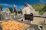 Corn drying at meagaliths, Bena village, Flores