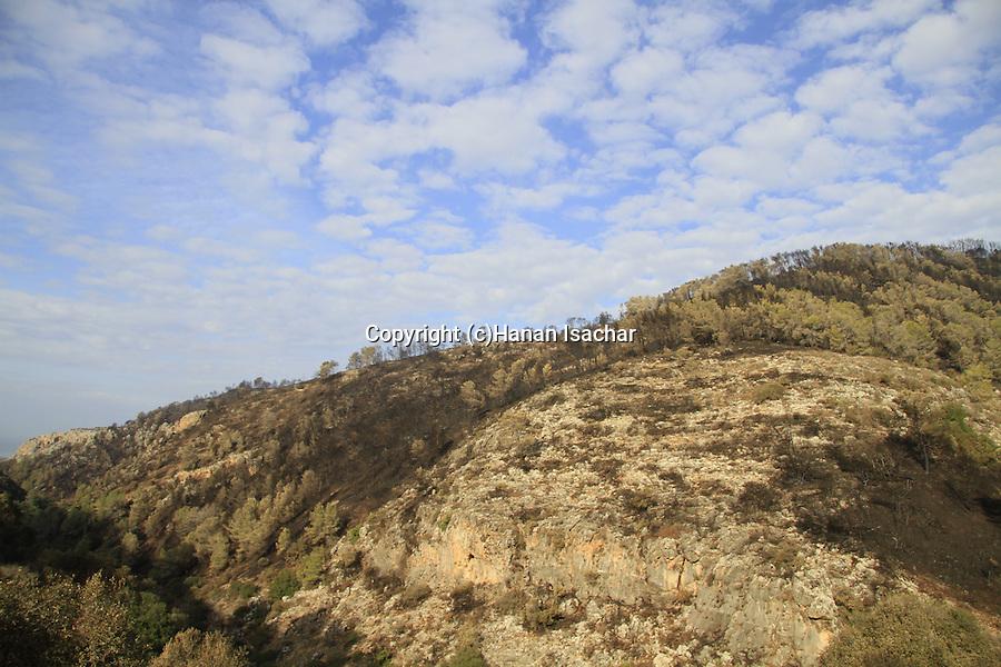 Israel, Mount Carmel, Wadi Oren after the big fire